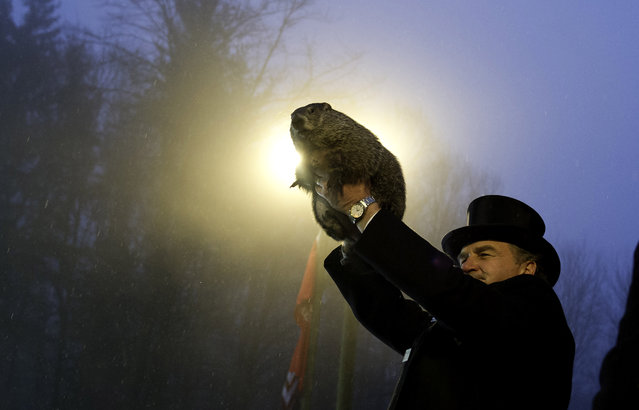 Groundhog handler John Griffiths holds Punxsutawney Phil after he saw his shadow predicting six more weeks of winter during 128th annual Groundhog Day festivities on February 2, 2014 in Punxsutawney, Pennsylvania. (Photo by Jeff Swensen/Getty Images)