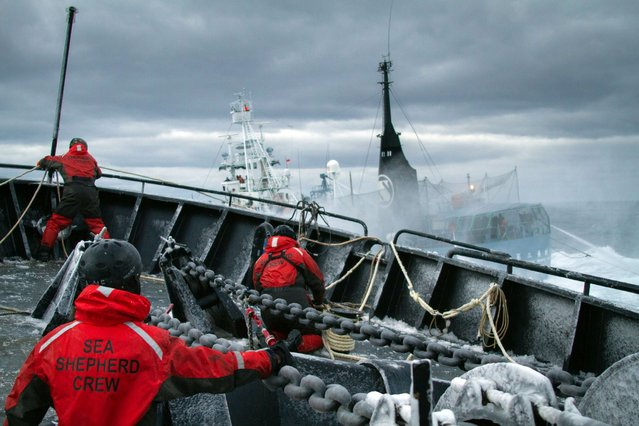 A handout photo taken on February 25, 2014 and received on February 26 shows the Sea Shepherd ship Bob Barker colliding with the Japanese whaling fleet fuel tanker the San Laurel, as Japanese whalers and militant conservationists clashed dangerously in icy waters off Antarctica, with both sides accusing the other of ramming their vessels. Veteran anti-whaling campaigner Paul Watson said the Japanese factory ship the Nisshin Maru rammed the Sea Shepherd Conservation Society's much smaller vessel the Bob Barker. (Photo by AFP Photo/Institute Of Cetacean Research)