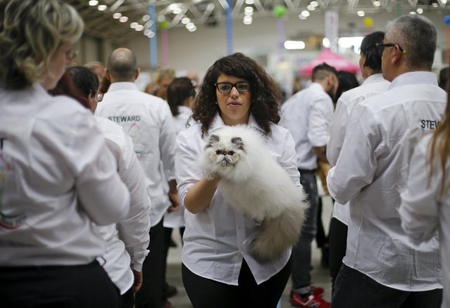 A steward holds a cat during the Mediterranean Winner 2016 cat show in Rome, Italy, April 3, 2016. (Photo by Max Rossi/Reuters)