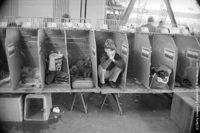 1974: A young owner crouches in one of the stalls during the Pup of the Year dog show at Olympia, London