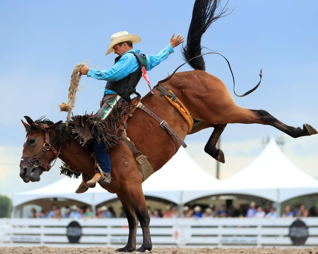 A rider competes during the bareback riding event at the Cheyenne Frontier Days in Cheyenne, the United States, July 24, 2019. (Photo by Li Ying/Xinhua News Agency)
