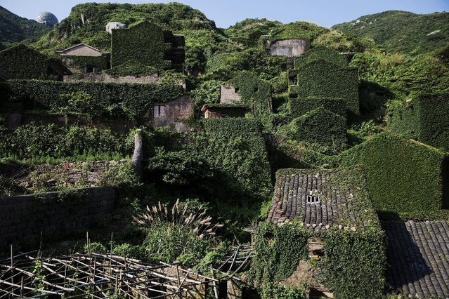 Plants grow on houses in the abandoned fishing village of Houtouwan on the island of Shengshan July 26, 2015. (Photo by Damir Sagolj/Reuters)