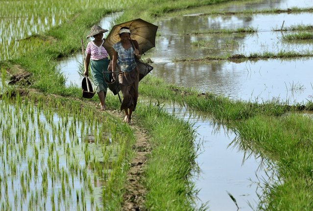 Rabha tribal women return home after fishing in their agricultural field in Krishnai, about 120 km from Guwahati city, India, 28 July 2014. Due to late monsoon this year, whole agricultural activities have got delayed by at least one month in northeast India. (Photo by EPA/STR)