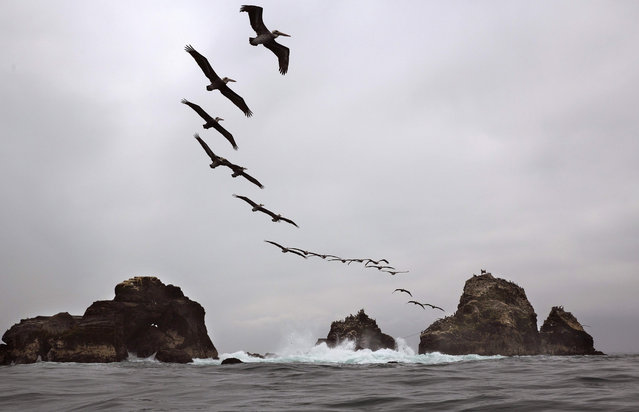 Pelicans fly over Oladal island in Lima, Peru, Tuesday, August 18, 2015. (Photo by Rodrigo Abd/AP Photo)