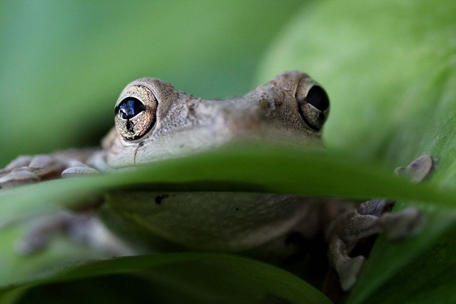 "Honorable Mention, Close-Ups. ""I've Got My Eye On You"". (Photo by Mary E. Canini/The Palm Beach Post)"