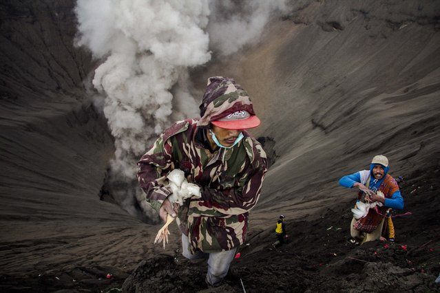 An Indonesian villager catches a chicken after being thrown by Hindu worshippers as an offering during the Yadnya Kasada Festival at crater of Mount Bromo in Probolinggo, East Java, Indonesia, 21 July 2016. (Photo by Fully Handoko/EPA)