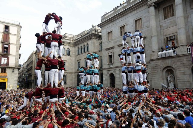 """(L-R) """"Castellers Colla Jove de Barcelona"""", """"Castellers Sagrada Familia"""" and """"Castellers de Poble sec"""" form a human tower during a demonstration at the festival of the patron saint of Barcelona """"The Virgin of Mercy"""" at Sant Jaume square in Barcelona September 24, 2014. (Photo by Gustau Nacarino/Reuters)"""