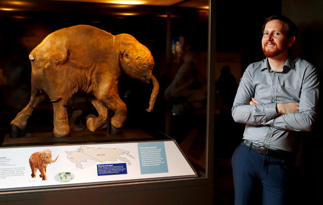 Paleontologist Dr. Matthew McCurry poses in front of Lyuba, a 42,000 years old Woolly Mammoth at the Australian Museum in Sydney, New South Wales, Australia, 16 November 2017 (issued 17 November 2017). The world's best preserved mammoth, a 42,000-year-old baby mammoth named Lyuba, is going on display for the first time Down Under at the Australian Museum. (Photo by Daniel Munoz/EPA/EFE)
