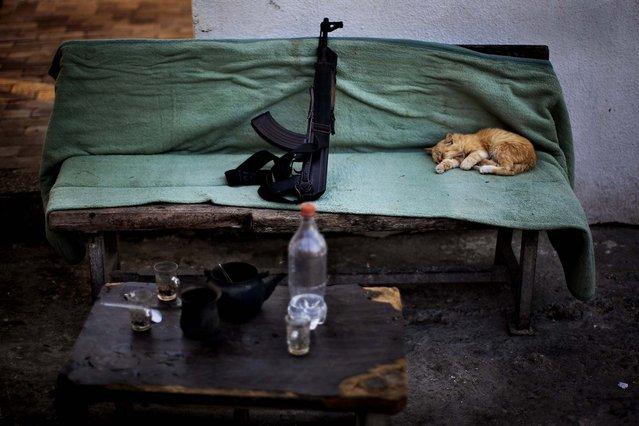 A cat sleeps next to a Kalashnikov weapon at a Hamas security check point in Gaza City, October 30, 2012. (Photo by Bernat Armangue/Associated Press)