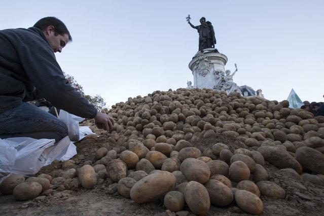 A farmer puts potatoes in bags before a distribution at Republique square in central Paris, November 5, 2014. French farmers unions organized a national day of protest against environmental restrictions and weak market conditions marked by a Russian food embargo. (Photo by Philippe Wojazer/Reuters)