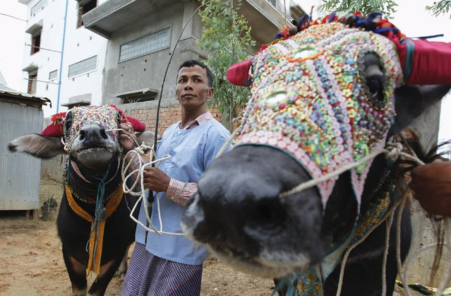 A man, with buffalos, looks on during a religious ceremony at Virhear Sour village in Kandal province, Cambodia October 12, 2015. (Photo by Samrang Pring/Reuters)