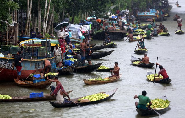 """Farmers row boats loaded with guavas on their way to a floating market in Barisal, Bangladesh on August 16, 2020. Thousands of farmers earn their livelihood growing and selling these guavas. Guava, a berry-like fruit, is often called the """"apple of the tropics"""". Although it originated in tropical America (in the land between Mexico and Peru), today it is one of the important fruit crops of Bangladesh, where its grown all over the country. The southern region of Bangladesh, especially districts of Barisal, Pirojpur, and Jhalbokathi, are the main Guava-producing areas. Nobody is certain when exactly this floating market began, but the tradition is at least a century old. (Photo by Sony Ramany/NurPhoto via Getty Images)"""