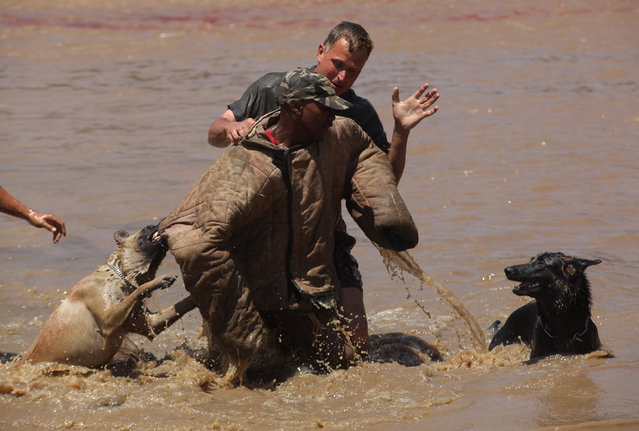"In this photo taken Wednesday, November 26, 2014 attack dogs and their handlers apprehend a ""rhino poacher"" center, after alighting from a helicopter into water,  in a simulation exercise showing training at an academy run by the Paramount Group, near Rustenburg, South Africa. (Photo by Denis Farrell/AP Photo)"