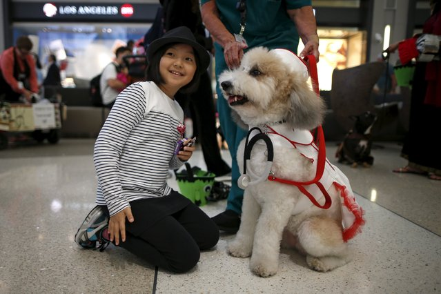 A therapy dog wears a nurse Halloween costume as part of a program to de-stress passengers at the international boarding gate area of LAX airport in Los Angeles, California, United States, October 27, 2015. (Photo by Lucy Nicholson/Reuters)