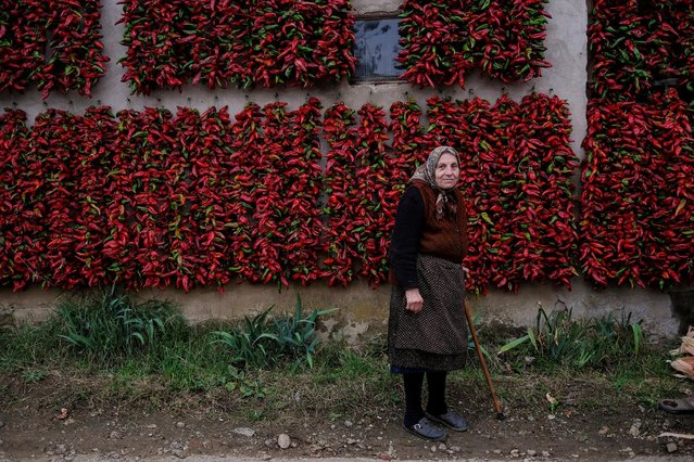 A woman poses for a picture as bunches of paprika hang on the walls of her house to dry in the village of Donja Lakosnica, Serbia October 6, 2016. (Photo by Marko Djurica/Reuters)