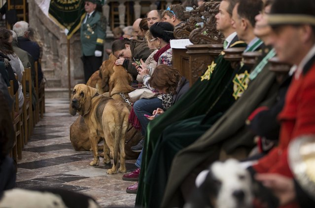 Dogs stand among faithfuls during a religious service ahead of a blessing ceremony for animals, at the Basilica of St Peter and Paul in Saint-Hubert, Belgium November 3, 2015. (Photo by Yves Herman/Reuters)