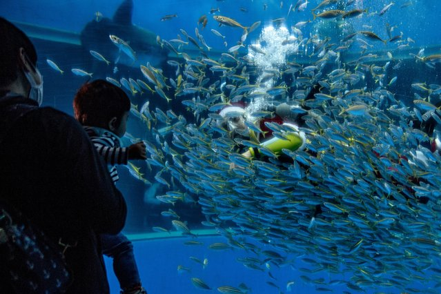 People watch a diver dressed as a Santa Claus feeds fish in an aquarium at the Hakkeijima Sea paradise in Yokohama on November 22, 2020. (Photo by Philip Fong/AFP Photo)
