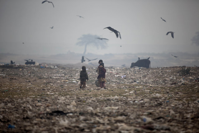 An Afghan refugee child looks back while she and others collect useful items from a garbage dump, on the outskirts of Islamabad, Pakistan, Tuesday, December 23, 2014. (Photo by Muhammed Muheisen/AP Photo)