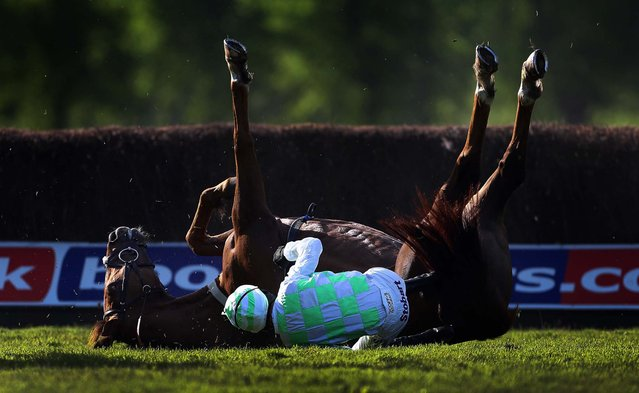 Like A Rolling Stone, ridden by Mark Grant, falls during a Beginners' Steeple Chase at Worcester Racecourse in England, on May 22, 2013. (Photo by David Davies/PA)