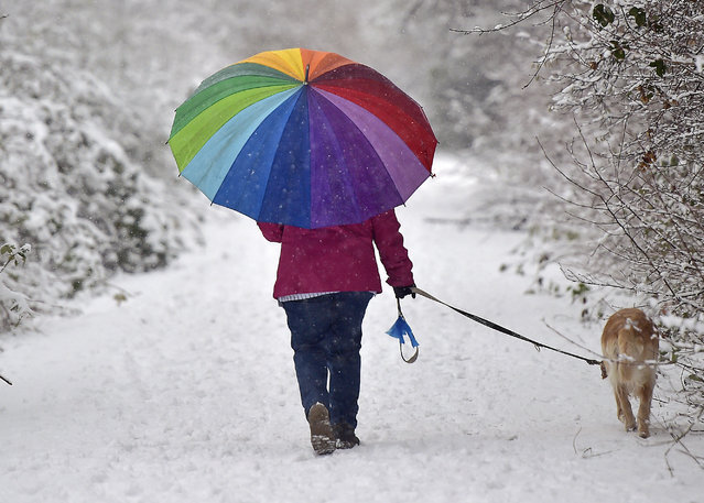 A woman walks walks with her dog under a colorful umbrella through the snow, Saturday, January 24, 2015 in Gelsenkirchen, Germany. The industrial west of Germany turned into a white winter landscape after heavy snowfall. (Photo by Martin Meissner/AP Photo)