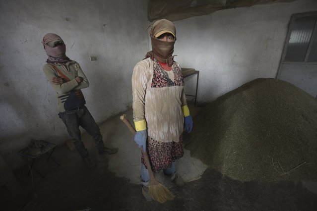 A 29-year old women (R) and her 13-year-old relative (who asked to withhold their names) talk while sweeping cannabis into a pile inside a garage in the Bekaa valley, Lebanon November 1, 2015. The woman fled Raqqa two months before with her 5-year-old son; her husband and other son are still in Raqqa. She works harvesting many crops, including cannabis, to support her family and is hoping to bring them to Lebanon. (Photo by Alia Haju/Reuters)