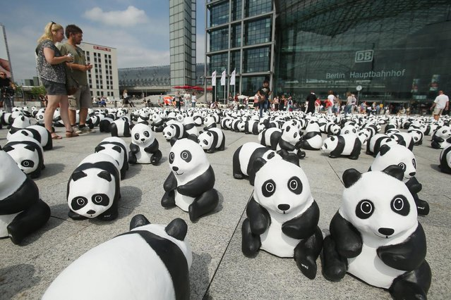 Tourists from Holland look at 1,600 styrofoam panda bear sculptures displayed in front of Hauptbahnhof main railway station by the World Wildlife Fund on August 5, 2013 in Berlin, Germany. The WWF is celebrating its 50th anniversary and is drawing attention to the fact that only 1,600 panda bears remain in the wild. The display will soon travel to 25 other cities in Germny. (Photo by Sean Gallup/Getty Images)