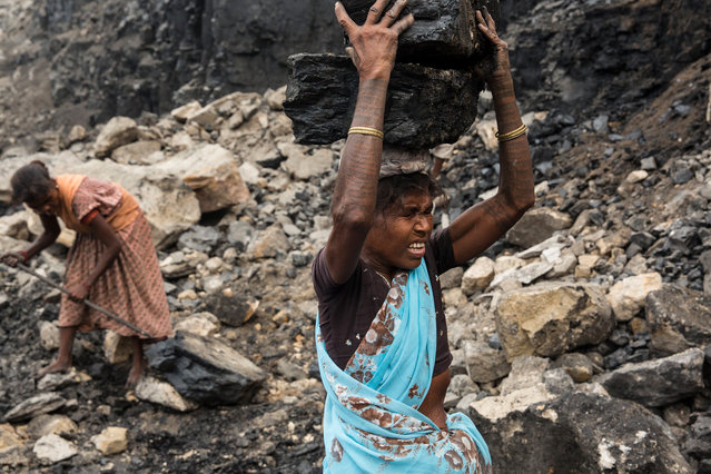 A woman – an illegal coal scavenger – hauls a heavy block of coal out of an operating open-cut coal mine in eastern India. She is a member of India's adivasis indigenous people. Jharkhand, India, 2013. (Photo by Hugh Brown/South West News Service)