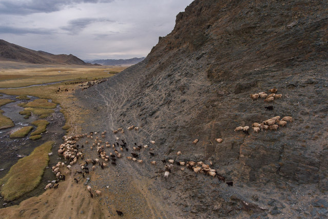 Joel's drone captures a stunning view of the family's goats and sheep trekking across harsh terrain in Altai Mountains, Mongolia, September 2016. (Photo by Joel Santos/Barcroft Images)