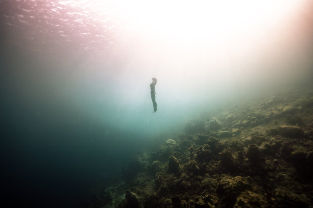 A diver makes her way to the surface. (Photo by Alex Voyer/Caters News Agency)