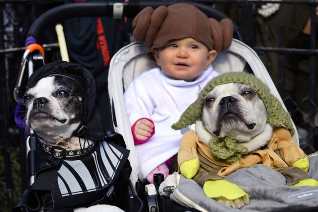"""A baby and two dogs dressed as characters from """"Star Wars"""" at the Halloween Dog Parade in New York. (Photo by Timothy Clary/Getty Images)"""