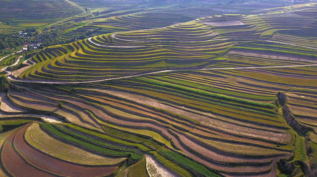 Terrace fields stretch to the horizon, creating a dramatic landscape in Xiji county, in the autonomous region of Ningxia Hui, Baiya township, China on August 16, 2017. (Photo by Xinhua/Rex Features/Shutterstock)