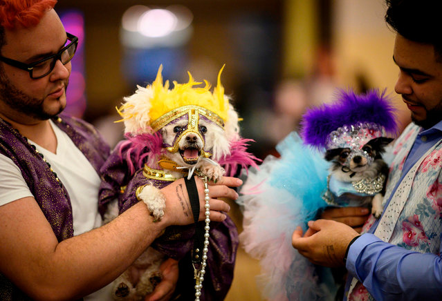 Two owners hold their dogs, dressed up for a show, backstage at the 16th annual New York Pet Fashion Show on February 7, 2019 in New York City. (Photo by Johannes Eisele/AFP Photo)