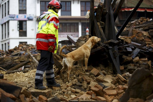 A German rescue team member along with a rescue dog search for the victims on the collapsed temple after the earthquake in Kathmandu, Nepal April 28, 2015. (Photo by Navesh Chitrakar/Reuters)