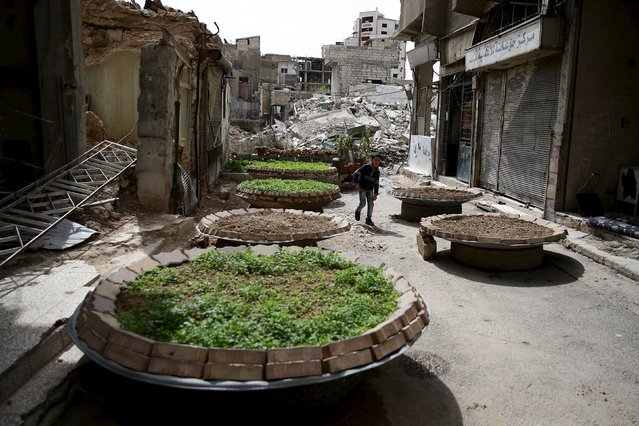 A boy walks past satellites dishes used as planting beds in the rebel held Qaboun neighborhood of Damascus, Syria March 13, 2016. (Photo by Bassam Khabieh/Reuters)