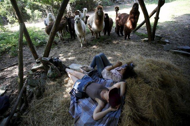 Lisa Vella-Gatt (R), 46, and volunteer Katharina Bartelmann rest next to the alpacas near Benfeita, Portugal May 11, 2015. (Photo by Rafael Marchante/Reuters)