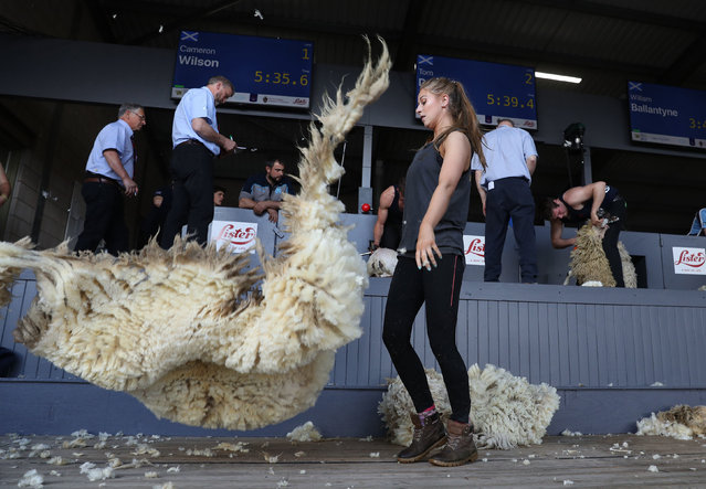 A young farmers sheep shearing competition at the Royal Highland Show in Edinburgh, England on June 22, 2019. (Photo by Andrew Milligan/PA Wire Press Association)