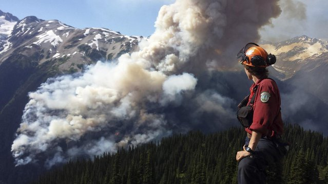 A Coastal Fire Centre crew leader views the Boulder Creek fire, about 250 hectares (618 acres) near Pemberton, British Columbia July 3, 2015. (Photo by Reuters/BC Wildfire Service)