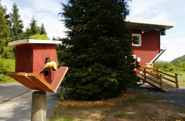 """A birdhouse is seen outside the """"Crazy House"""", which is completely built upside-down, in the village of Affoldern near the Edersee lake, May 7, 2014. Three friends came up with the idea to build the tourist attraction, which cost about 200,000 euros and took some six weeks to complete. (Photo by Kai Pfaffenbach/Reuters)"""