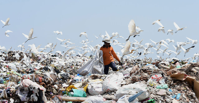 A Sri Lankan worker sorts garbage at a dump in Karadiyana, a suburb of Colombo on April 20, 2017, after the city's main landfill closed after a garbage mountain collapsed killing 32 people and destroying 145 homes. The Colombo municipality obtained permission from court to override protests from local residents and move garbage to Karadiyana as a temporary measure until a permanent solution to Colombos garbage problem is found. (Photo by Ishara S. Kodikara/AFP Photo)