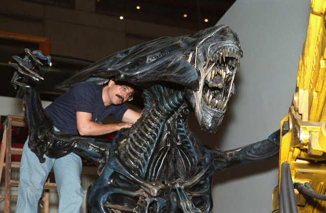 "Jim Engelhardt of the California Museum of Science and Industry secures the head of the Alien Queen from the movie ""Alien"" at the Museum of Science in Boston, Sept. 24, 1988. (Photo by Susan Walsh/AP Photo)"