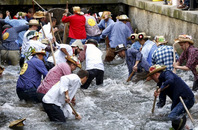 Fishermen try to catch trouts in a small river as they celebrate Fischertag (Fisherman's Day) in downtown Memmingen, southern Germany, July 25, 2015. (Photo by Michaela Rehle/Reuters)