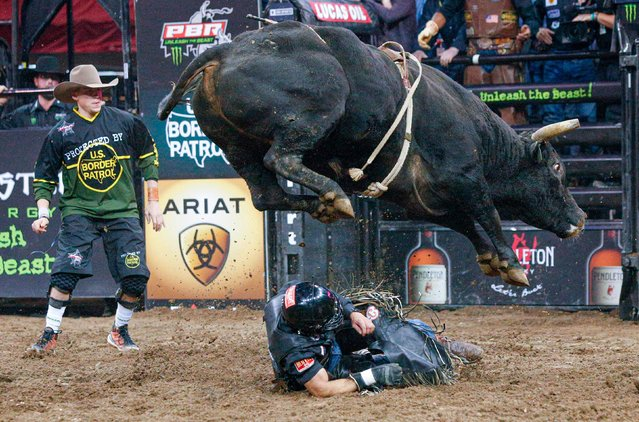 Rubens Barbosa falls as he competes during the PBR Unleash the Beast Bull Riding competition at Madison Square Garden on January 03, 2020 in New York City. (Photo by Kena Betancur/AFP Photo)