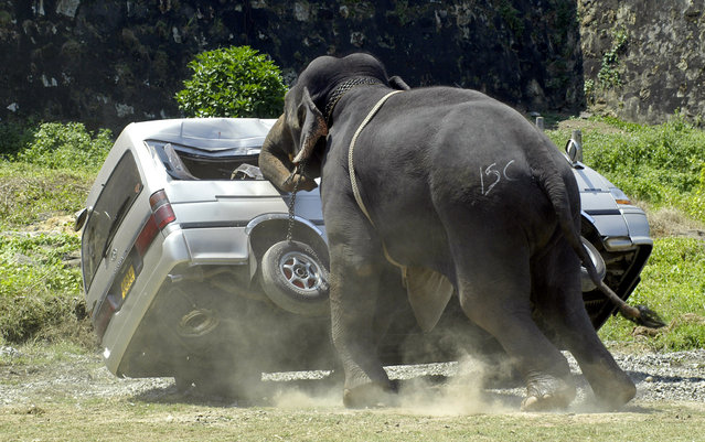An elephant destroys a minibus after throwing its rider and going on a rampage during Sri Lanka's sixth annual elephant polo tournament in Galle February 15, 2007. Abey, a four-tonne eighteen-year-old elephant, threw off his mahout and American rider and went on a rampage destroying a vehicle before being subdued. (Photo by Buddhika Weerasinghe/Reuters)