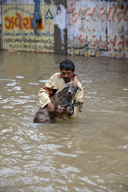 An Indian resident assists a dog as he wades through floodwaters in Ahmedabad on July 30, 2014. Rains lashed Ahmedabad and many regions of India's western Gujarat state, wth the Indian Metrological Department warning of heavy rains for the next 48 hours. (Photo by Sam Panthaky/AFP Photo)