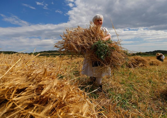 A woman collects barley during the Harvest Festival in Hosszuheteny, Hungary, July 9, 2016. (Photo by Laszlo Balogh/Reuters)