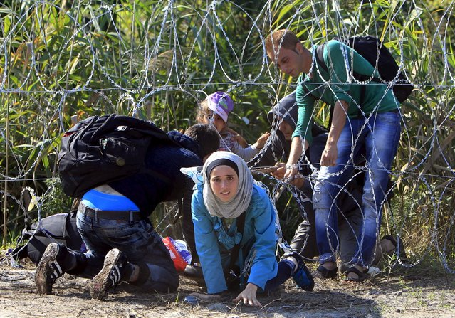A Syrian migrant family enters Hungary at the border with Serbia near Roszke, Hungary August 28, 2015. (Photo by Bernadett Szabo/Reuters)