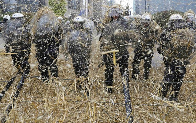 Belgian riot police officers are covered by hay thrown by demonstrators as farmers and dairy farmers from all over Europe take part in a demonstration outside an European Union farm ministers emergency meeting at the EU Council headquarters in Brussels, Belgium, September 7, 2015. (Photo by Yves Herman/Reuters)