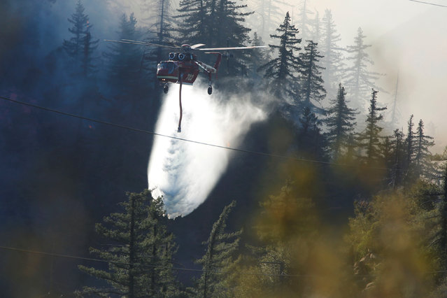 A firefighting helicopter makes a water drop near power lines during the Pilot Fire in San Bernardino county near the Deer Lodge Park area in Lake Arrowhead, California, U.S. August 9, 2016. (Photo by Patrick T. Fallon/Reuters)