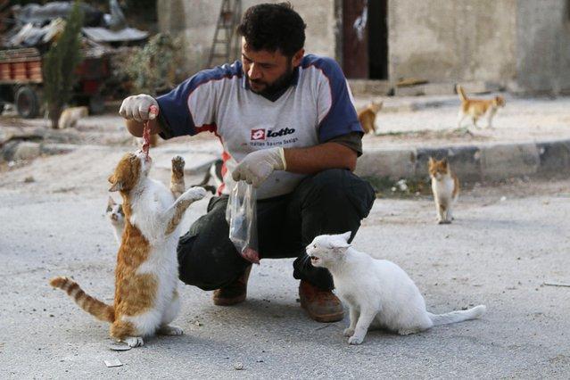 Alaa, an ambulance driver, feeds cats in Masaken Hanano in Aleppo, September 24, 2014. (Photo by Hosam Katan/Reuters)