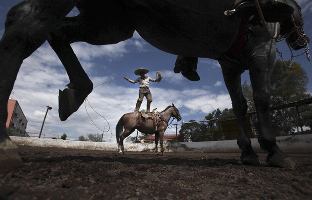 "Charro Leonardo Flores, stands on his horse Canelito while showing off his roping skills; a move called, ""florear sobre el caballo"", during a practice session at a corral in southern Mexico City, August 31, 2014. (Photo by Marco Ugarte/AP Photo)"